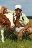 Tapotements de vache à berger. Photo libre de droits