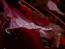 tappa leafen Royaltyfri Fotografi