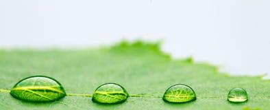 tappa leafvatten Arkivfoto