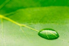 tappa leafvatten Royaltyfria Bilder