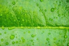 tappa leafvatten Fotografering för Bildbyråer