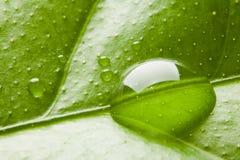 tappa leafvatten Arkivfoton