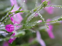 Tappa på leafen fotografering för bildbyråer