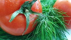Tappar den röda tomaten för dill som är våt på vit bakgrund, att plaska stock video