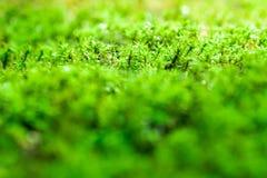 Tappar grön mossa för friskhet som växer på golv med vatten, i suen royaltyfria foton