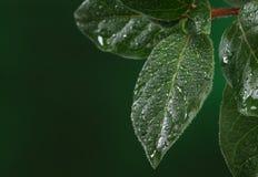 tappar nytt leavesvatten Arkivfoton