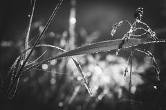 Tappar på gräset Arkivfoton