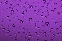 tappar purple Royaltyfria Foton