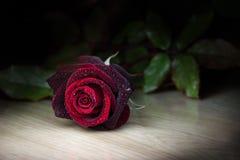 tappar rött rose vatten royaltyfri foto