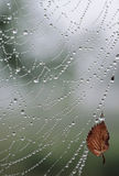 tappar spindelvattenrengöringsduk Royaltyfri Fotografi