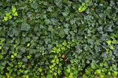 Tappeto bagnato verde Immagini Stock