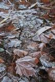 Tappeto congelato autunnale dei leavs Immagine Stock Libera da Diritti