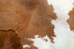 Tappeto della pelliccia Immagini Stock