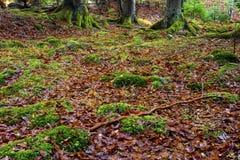 Tappeto delle foglie nella foresta Fotografia Stock Libera da Diritti