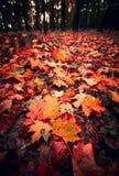 Tappeto di autunno delle foglie Fotografia Stock