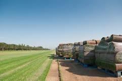 Tappeto erboso dell'erba Fotografie Stock Libere da Diritti