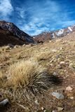 Tappeto erboso dell'erba asciutta con le alte montagne di atlante Immagini Stock Libere da Diritti