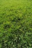 tappeto erboso eccellente verde Fotografia Stock