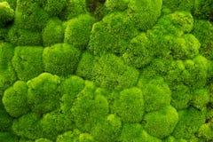 Tappeto erboso verde Fotografie Stock