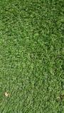 Tappeto erboso verde di astro Fotografia Stock Libera da Diritti