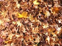 Tappeto spesso delle foglie di autunno Fotografia Stock Libera da Diritti