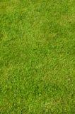 Tappeto verde Fotografie Stock Libere da Diritti