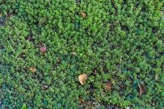 Tappeto verde Fotografia Stock