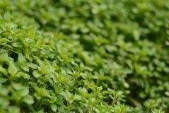 Tappeto verde delle foglie Fotografie Stock
