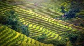 Tappezza il riso del pendio di collina Fotografia Stock