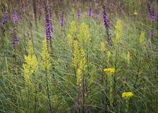 Tappezzeria del Wildflower Immagine Stock Libera da Diritti