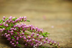 Tappning blommar bakgrund - makro Arkivfoto