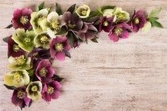 Tappning blommar pastellfärgad färg för bakgrund Royaltyfria Foton