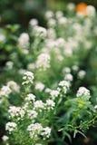 Tappning för vit blomma Arkivfoto