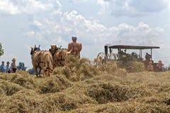 Tappning häst drog Hay Tedder Arkivfoton