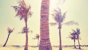 Tappning stiliserad bild av en palmträdstam Royaltyfria Foton