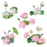 Tappning Waterlily blommar Bouguette i vattenfärgstil vektor vektor illustrationer