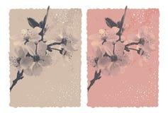 Tappningbakgrund med blomningplommonet Arkivfoto