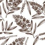 Tappningbakgrund med det utdragna teträdet för handen skissar Skönhetsmedel och sömlös modell för medicinsk myrtenväxt Bot för ve royaltyfri illustrationer