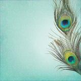 Tappningbakgrund med påfågelfjädrar Arkivfoto