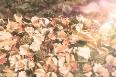 Tappningbakgrunder torkar blommasidor på jordningen med sol-signalljuset filtret, tappningsignal Arkivfoto