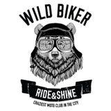 Tappningbilder av grisslybjörnen för t-skjorta planlägger för motorcykeln, cykeln, mopeden, sparkcykelklubban, aero klubba royaltyfri illustrationer
