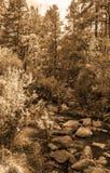 Tappningblickbilder av den Jemez floden i nytt - Mexiko Royaltyfri Fotografi