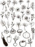 Tappningblommor & grönsaker vektor illustrationer