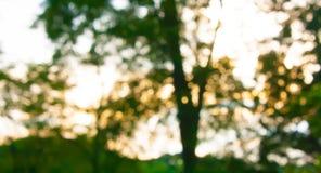 Tappningbokehbakgrund från naturligt Royaltyfria Bilder