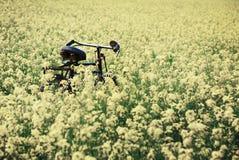 Tappningcykel i lantligt senapsgult fält Royaltyfri Foto