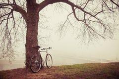 Tappningcykel nära träd i dimma Arkivbilder