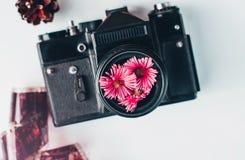 Tappningfilmkamera, rosa färgblommor och film på vit bakgrund Royaltyfri Fotografi
