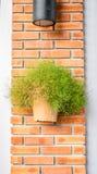 Tappningfilter: blomkruka som hänger den orange tegelstenstolpen Arkivfoto