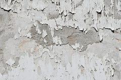 Tappningflingor av gammal vit målarfärg över den gråa betongväggen Royaltyfria Foton