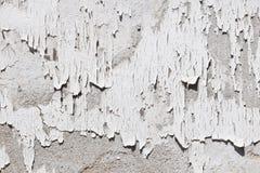 Tappningflingor av gammal vit målarfärg på den gråa betongväggen Arkivfoton